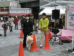 盲導犬体験歩行