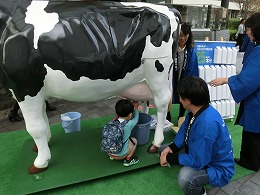 模型牛の搾乳体験